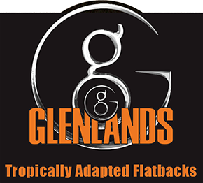 Glenlands | Tropically Adapted Flatbacks